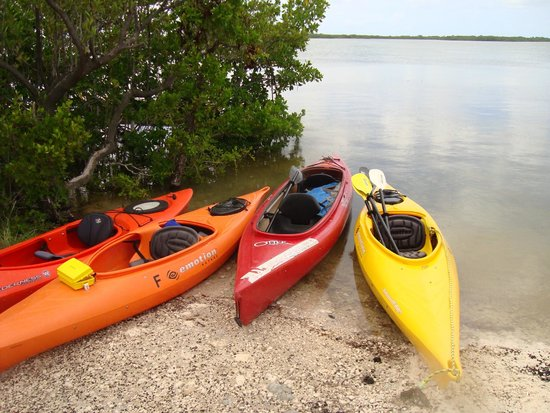 Florida Keys Kayaks and Eco Tours : Great Adventure in the Keys