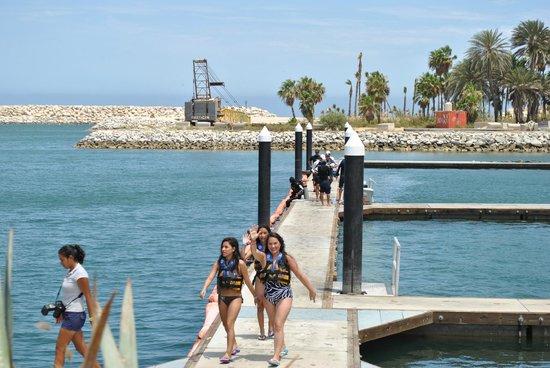 Marina Cabo San Lucas: cabo