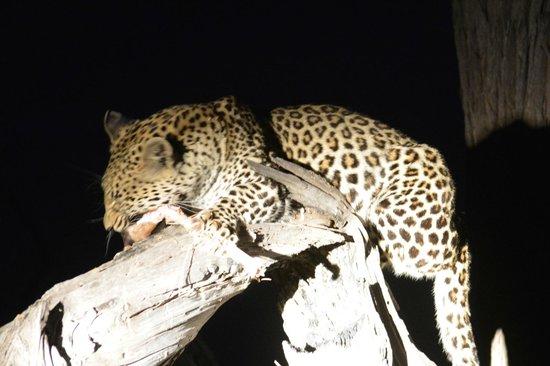 Little Kwara: Excellent wildlife opportunities