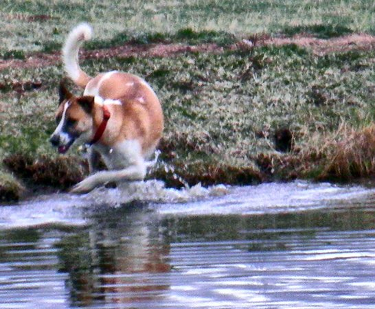 Sundance Trail Guest & Dude Ranch: Rosy Playing in the pond