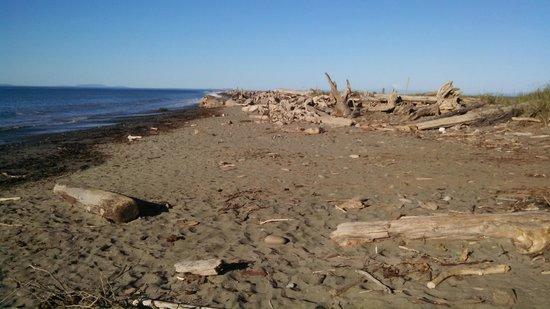 Dungeness National Wildlife Refuge: Driftwood Filled Beaches