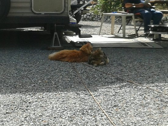 Living Forest Oceanside Campground & RV: Milo and Meisha chillaxin!
