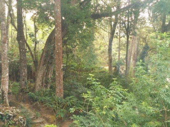 The Tall Trees Munnar: Trees
