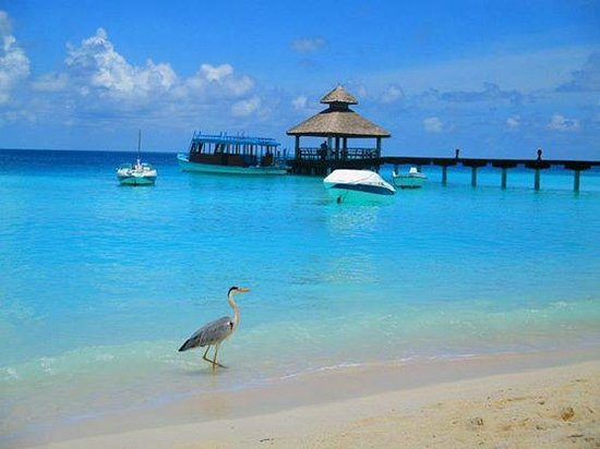 Reethi Beach Resort: Beautiful day at RB - view of the dock from the Main Bar