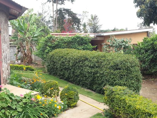 Baraka Lodge: the garden