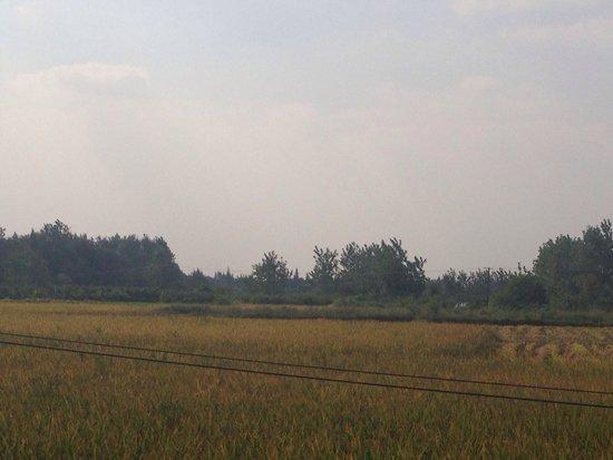 Shishou, China: Rice fields in Zouma Village