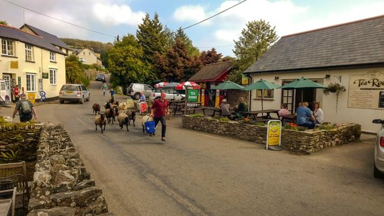 Withypool Tea Rooms: Village life in Withypool