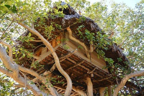 Sangany Lodge : Bungalow sull'albero