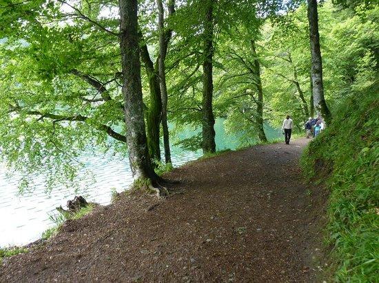Chemin longeant le Lac Pavin