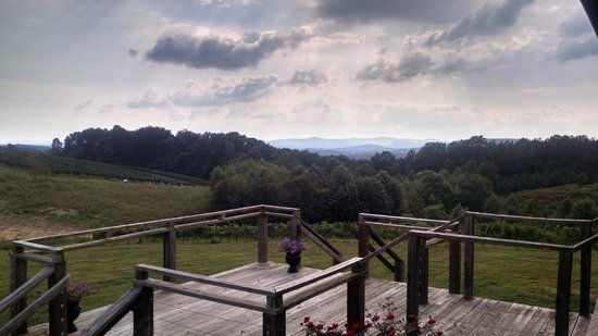 Dobbins Creek Vineyards: Vineyard View