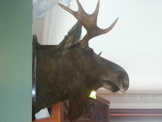 Pickwick: The moose on the wall