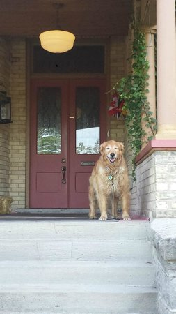 Park Place Bed & Breakfast: Brandy, the sweetest dog in Niagara Falls