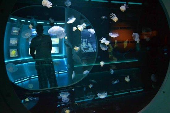 Mare Nostrum: fotograf?a de Aquarium Mare Nostrum, Montpellier ...