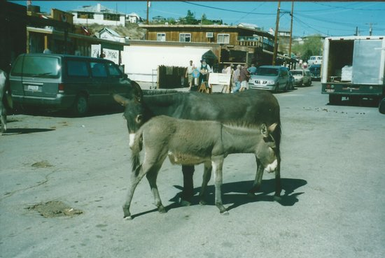 Oatman Stables: They were so friendly