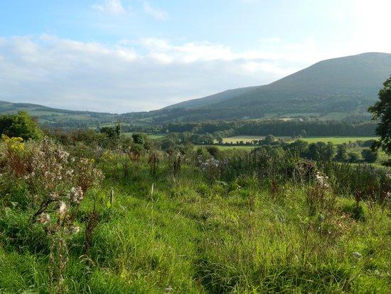 Ardpatrick, Ireland: Wonderful view...