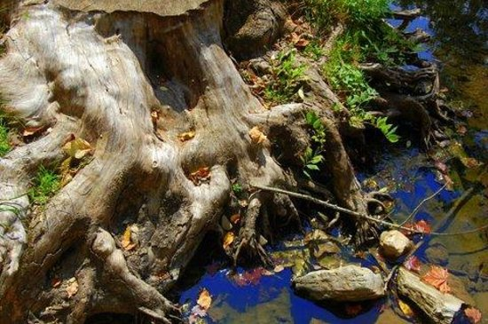 Humpback Bridge: stump