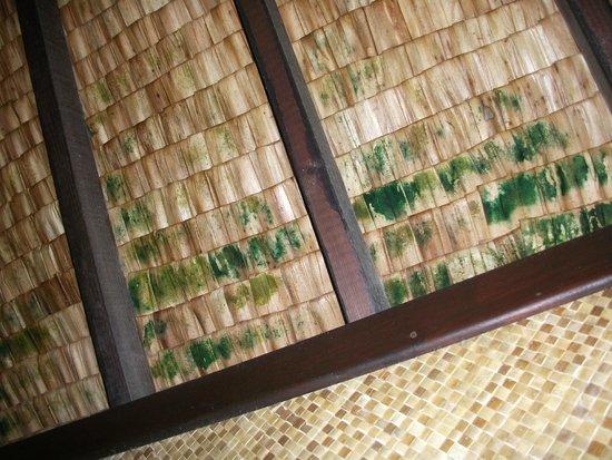 Village Temanuata : Merlimont ? NON, Bora Bora !