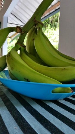 TJ Ranch: Green Plantains. Both kind are served