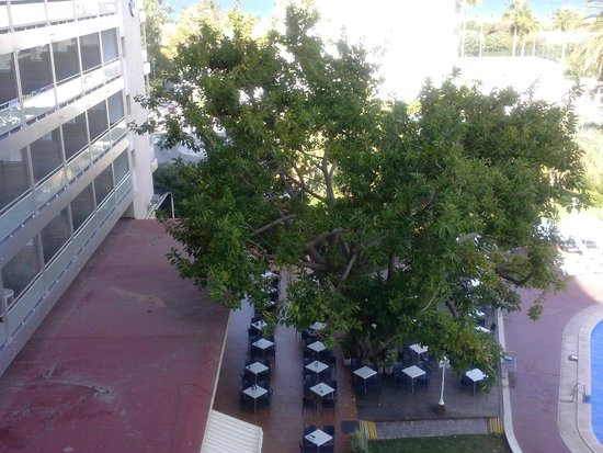 Hotel Tres Anclas: Ficus