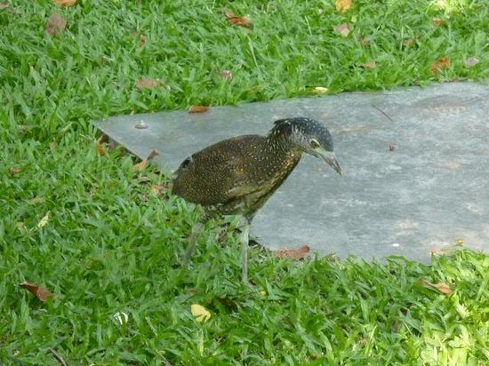 228 Peace Memorial Park : 変わった鳥