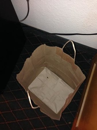 Americas Best Value Inn & Suites: German roach that crawled into a bag that had boxed leftovers in the night before.