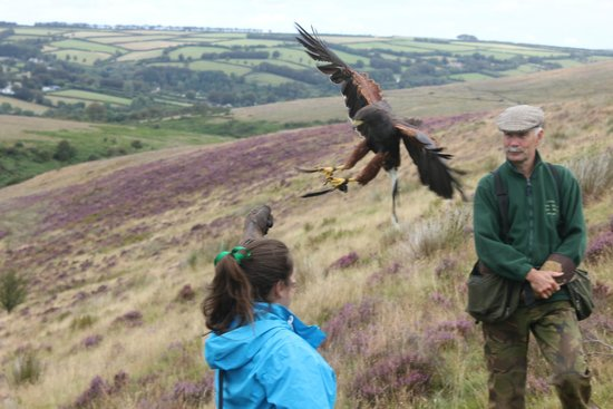 North Devon Hawk Walks: Wow