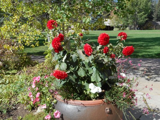 peonies picture of betty ford alpine gardens vail tripadvisor. Cars Review. Best American Auto & Cars Review