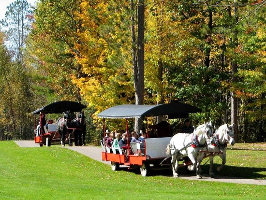 Thunder Bay Resort: Fall Carriage Ellk Viewing Rides