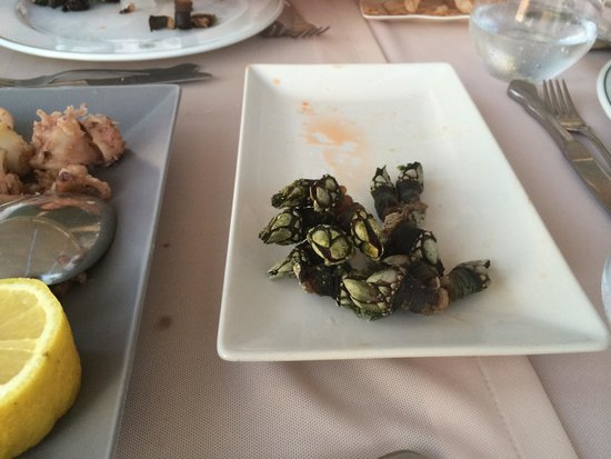Timon Playa: Barnacles are a treat!