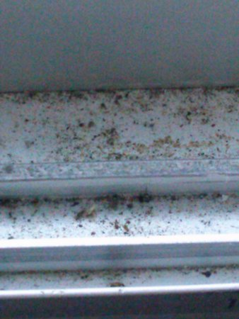 Days Inn Port Jervis: Dirt and dead bugs by window