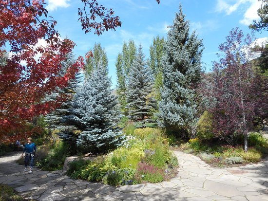 blue spruce picture of betty ford alpine gardens vail tripadvisor. Cars Review. Best American Auto & Cars Review