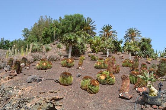 Im hungry - Picture of Oasis Park Fuerteventura, Fuerteventura - TripAdv...