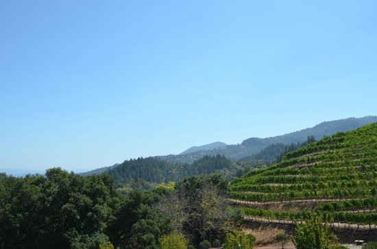 Newton Vineyard: beautiful view