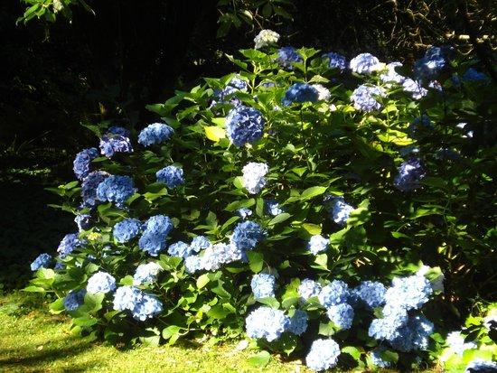Mount Usher Gardens: Hydrangea walk