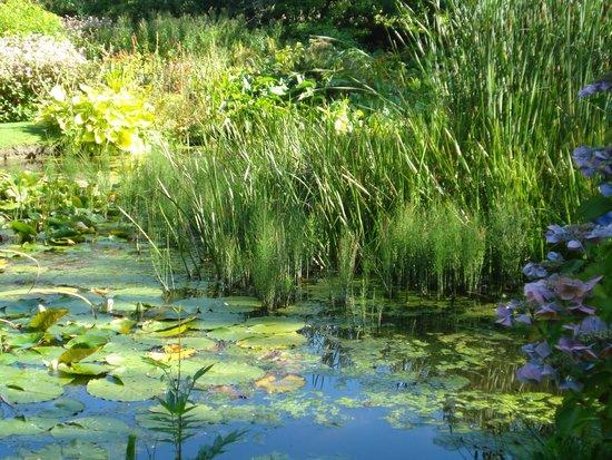 Mount Usher Gardens: Lily pond