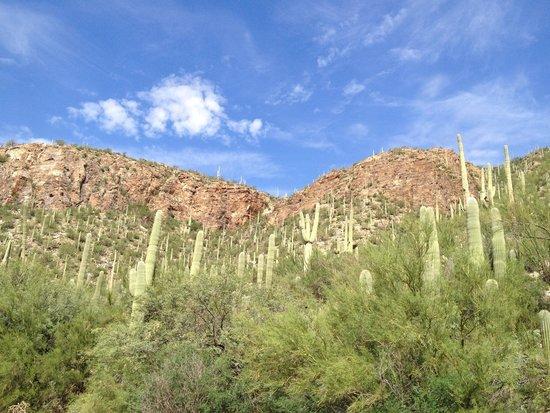 Sabino Canyon: Perfect view of desert