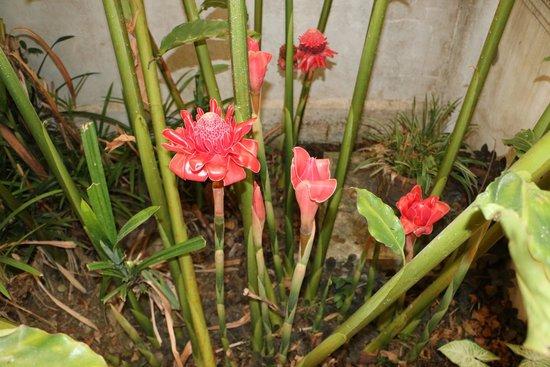 Villa Saykham: Цветы в отеле.