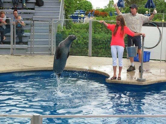Aquarium du Quebec : The seal show.