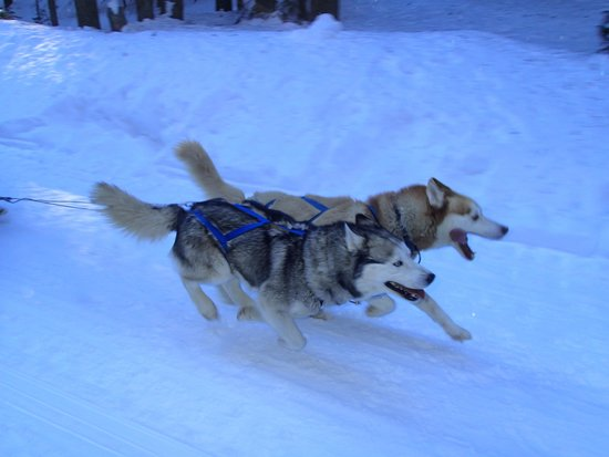Good Times Adventures: fast dogs
