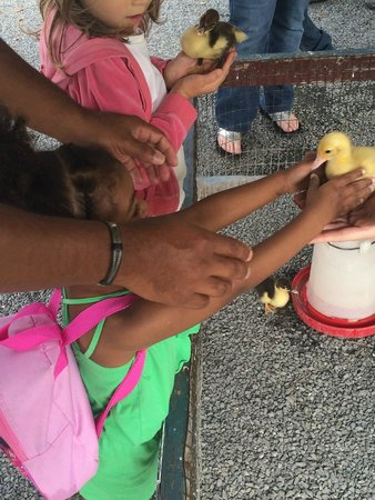 Rolling Ridge Ranch: Holding the duckling