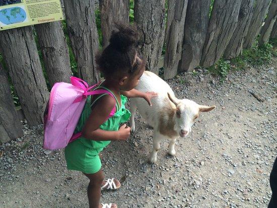 Rolling Ridge Ranch: Petting zoo