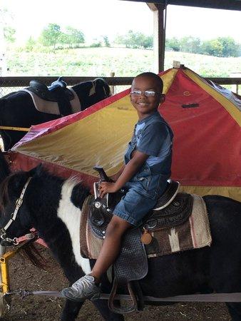Hershberger Farm & Bakery: Pony Ride