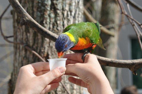 Le Parc des Oiseaux : Vous aurez la possibilité de nourrir directement les oiseaux.