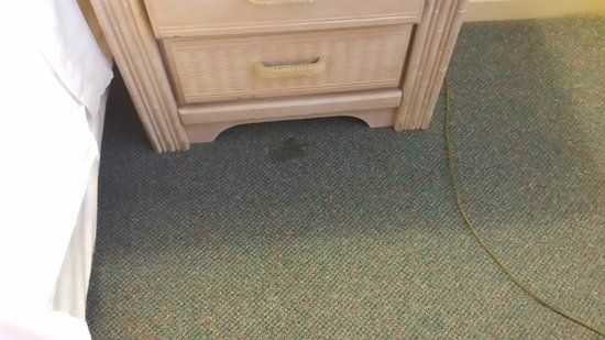 Beach Colony Resort: Bedroom Carpet Stains