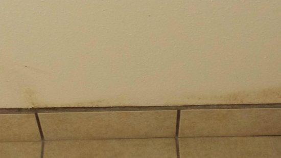 Beach Colony Resort: Bathroom mildew walls
