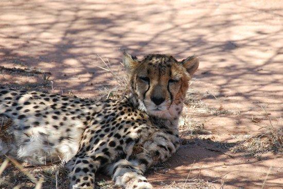 Cheetah Conservation Fund: Unbeschreiblich