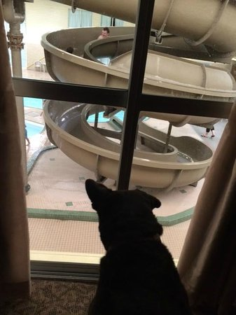 Clarion Hotel & Suites: Lilly loved watching the kids play
