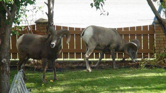 Radium Park Lodge : Wildlife