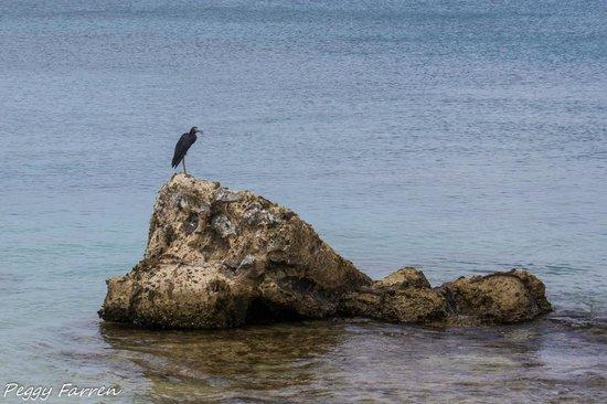 Blackwood Imaging: Bird posing for us.