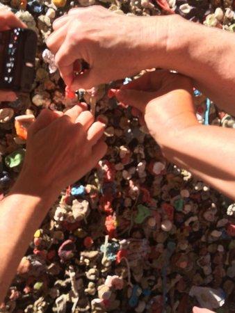 San Luis Obispo, CA: Planting our gum